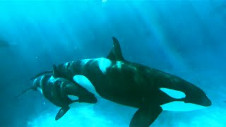 Orca Experts Go to SeaWorld