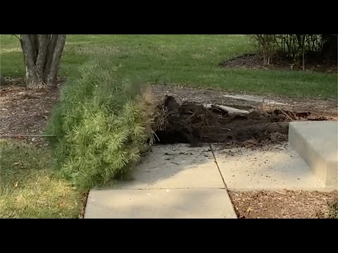How to remove a bush from your yard