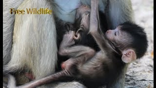 Twins Babies Monkeys Still be Good - cutes and Healthy