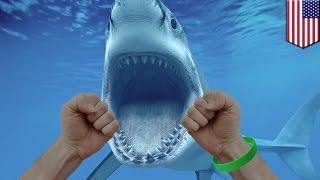 Nastolatek uderza rekina pięścią w pysk i unika śmierci