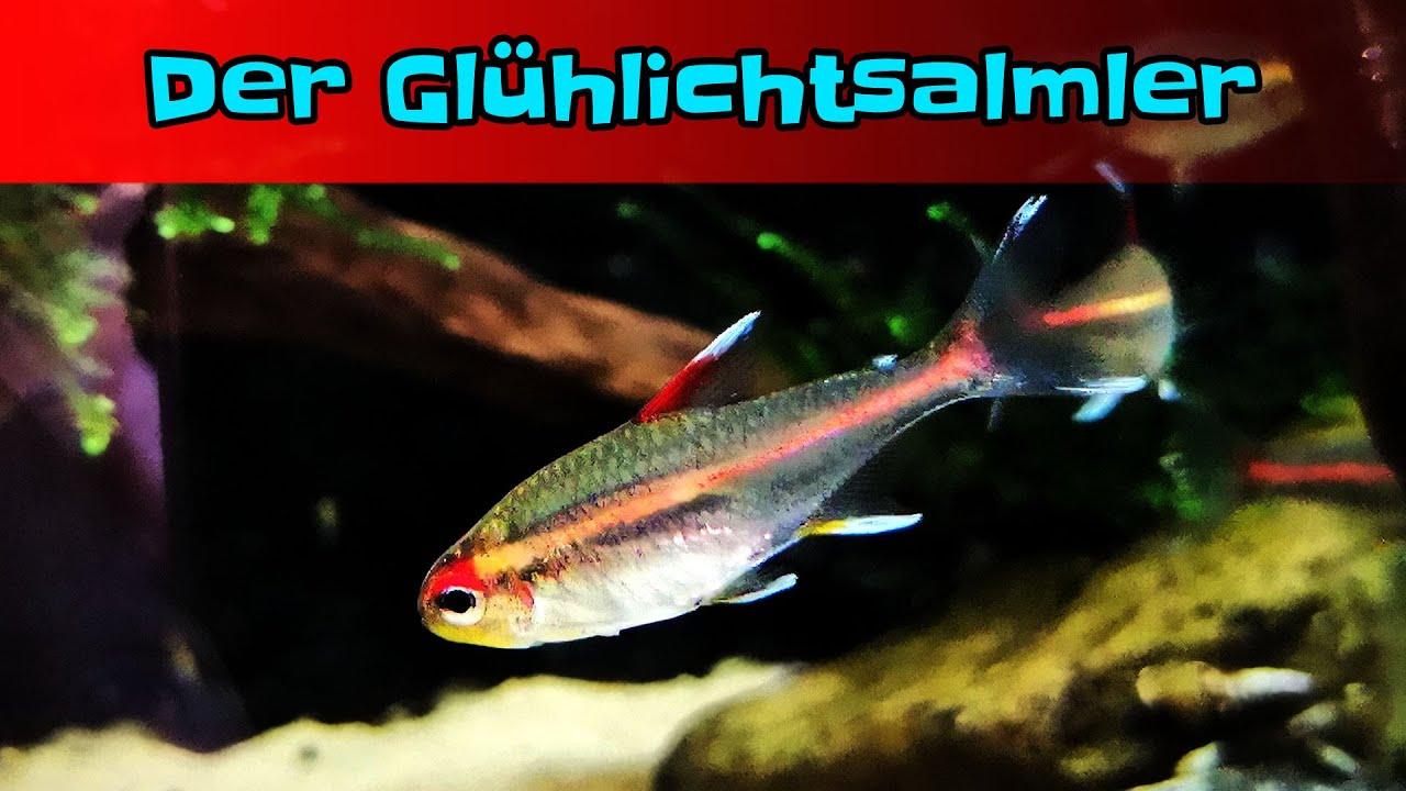Für aquarium anfängerfische 60l Aquarium robuste