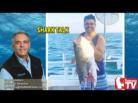 July 30, 2020 Long Island Fishing Report And Forecast With Fred Golofaro