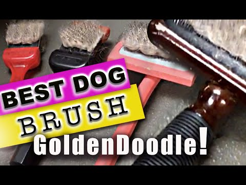 BEST Brush for your GoldenDoodle