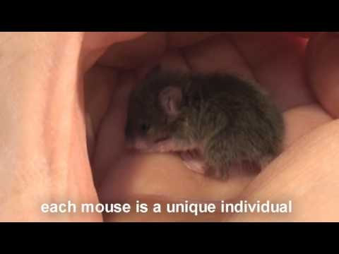 Baby Mouse Purring