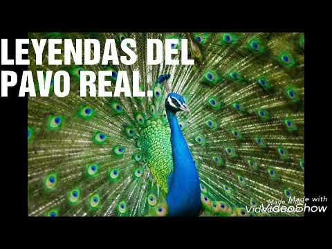 EL PAVO REAL LEYENDA GRIEGA Y MAYA.
