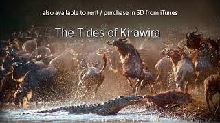 The Tides of Kirawira  OFFICIAL