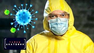 Иммунная система. Тайны анатомии cмотреть видео онлайн бесплатно в высоком качестве - HDVIDEO