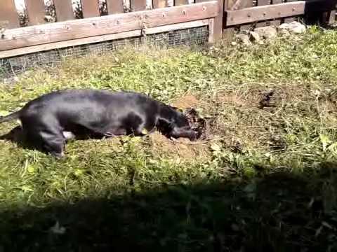 Ugo cerca le talpe in giardino youtube for Talpe in giardino