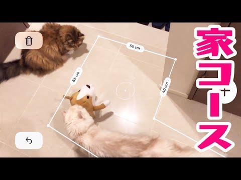 iPhoneで家に猫用コース作って遊んでみた!