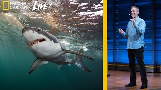 Great White and Oceanic Whitetip Sharks  Photographing Top Ocean Predators  (Part 3) | Nat Geo Live