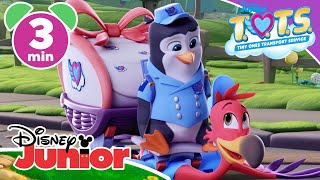 T.O.T.S. | Magical Moment: You've Got To Be Kitten Me 🐈 | Disney Junior UK