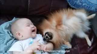 5 Months Old Baby Playing With Pomeranian Puppy