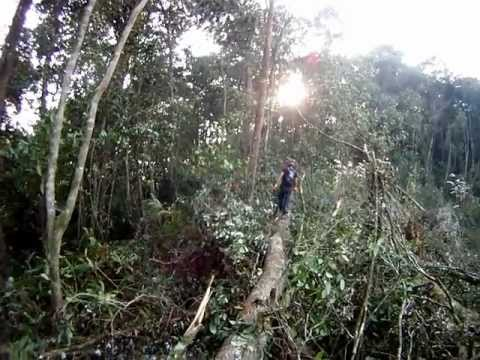 SKL - Hiking to Gunung Swettenham (1961m), Cameron Highlands, Pahang, Malaysia (Video-32)