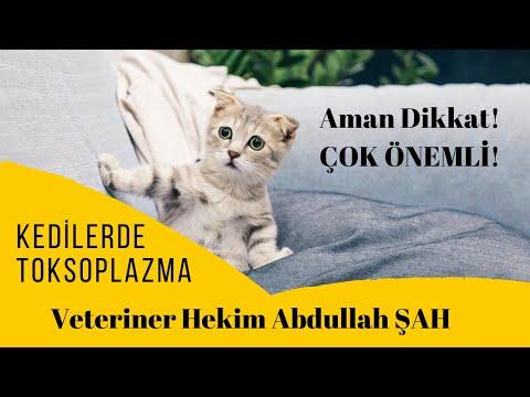 Kedilerde Toksoplazma Gondii Hastalığı Nedir?