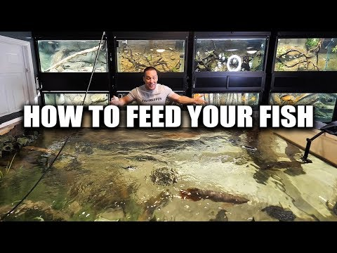 How to feed aquarium fish