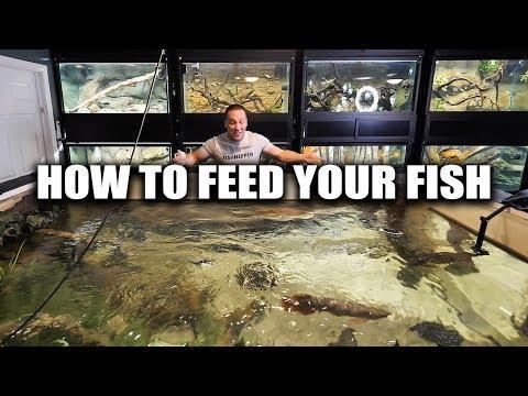 How To Feed Aquarium Fish