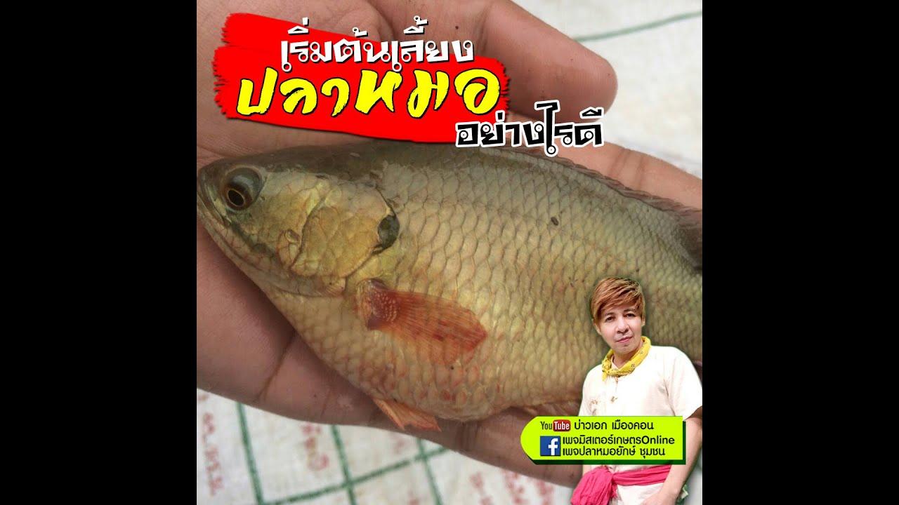 เร มต นเล ยงปลาหมอย างไรด Youtube กบ