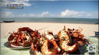 진짜 바다의 맛! 마다가스카르의 베테랑 잠수부가 잡은 바닷가재