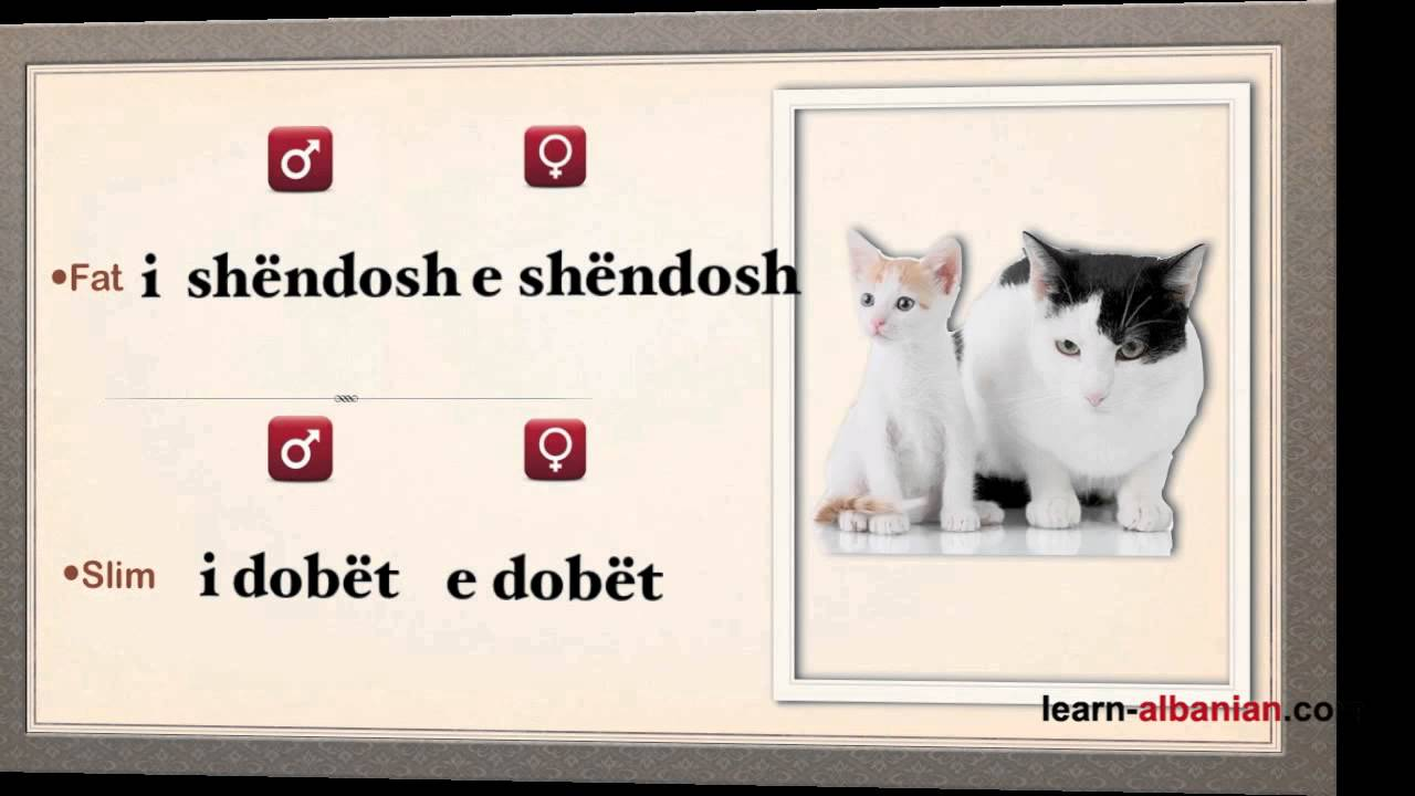 how to learn antonyms &