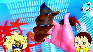 【海の生き物アニメ】海ほおずきでネコザメや伊勢エビを観察したよ!