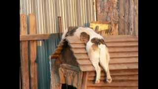 собака с ночной смены!!!.(, 2012-04-19T09:52:18.000Z)