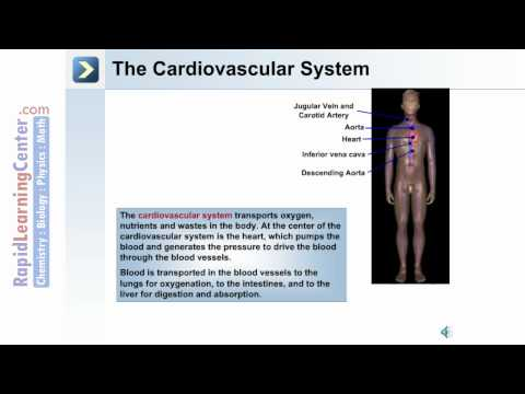 Intro to the Human Body – The Organ System of the Human Body