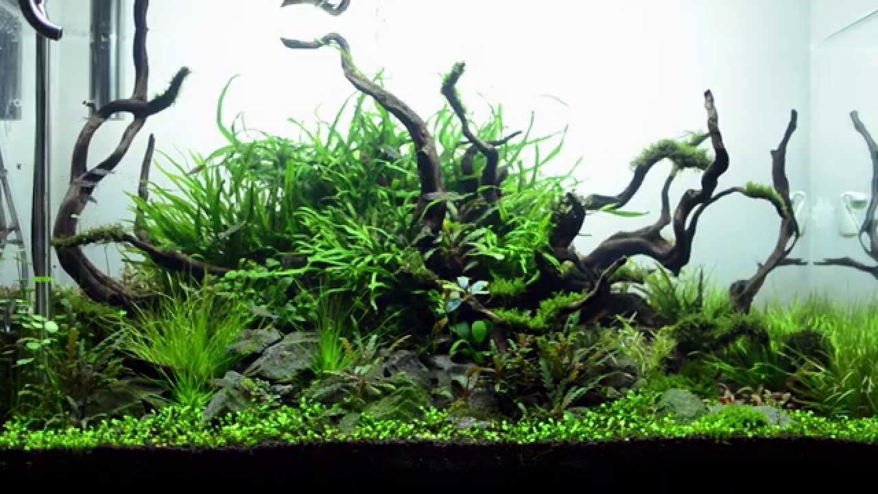 90cm Aquascape Maintenance And 1 Month Update : Aqueous Reflection   YouTube