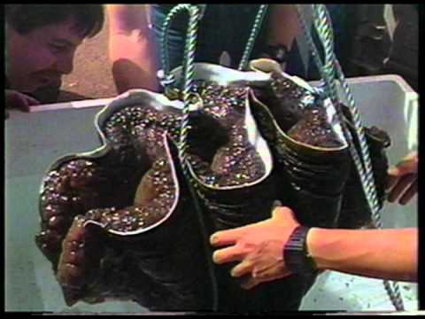 Waikiki Aquarium Giant Clam 1982-2012.mov