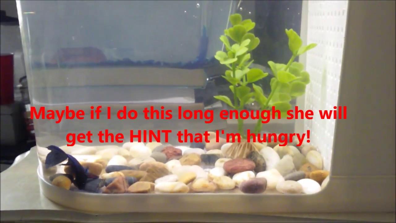 Top Fin:Fish Eye View Aquarium Pro\'s and Con\'s (2 Gallon) - YouTube