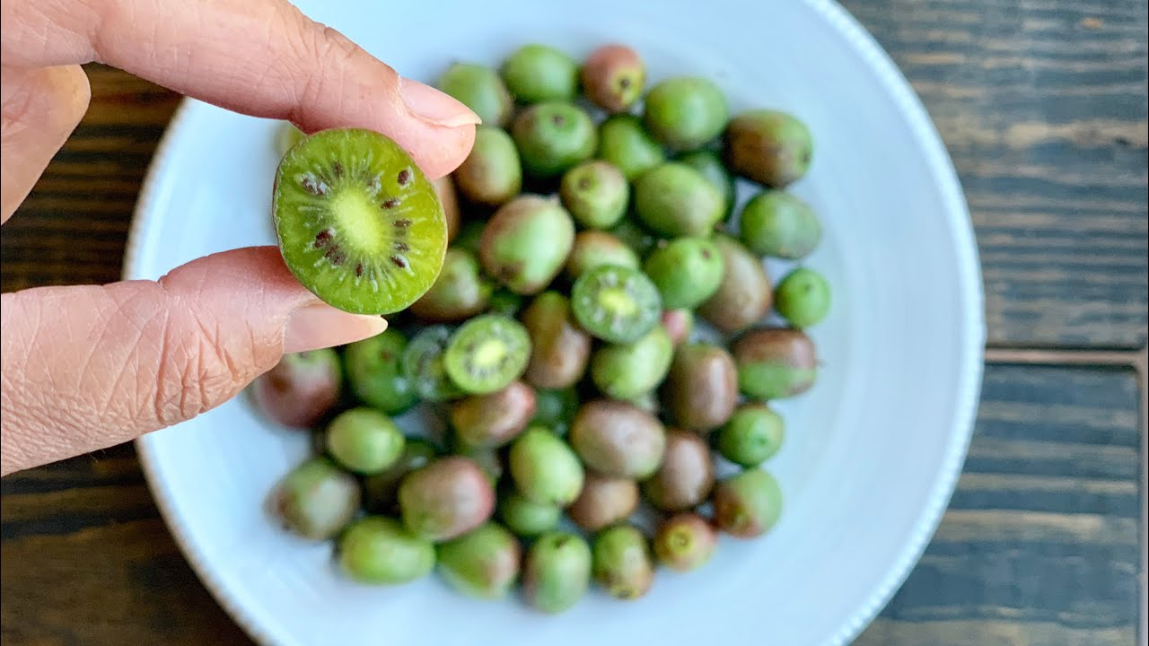 What Is A Kiwi Berry And How To Eat It With Raihana S Cuisines Youtube