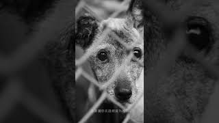 徐佳瑩 LaLa【記得帶走】短片流浪動物之家狗狗篇