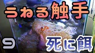 半年経過の海水水槽【光量不足?】 thumbnail