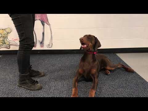 Name Recognition with Gracie, a Doberman