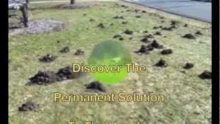 Gopher & Mole Control Tips, Review, Discounts