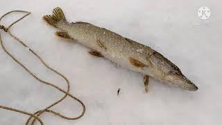 17 февраля 2021 г Рыбалка на Селетинском водохранилище Поехали с ночевкой за судаком а поймали щуку