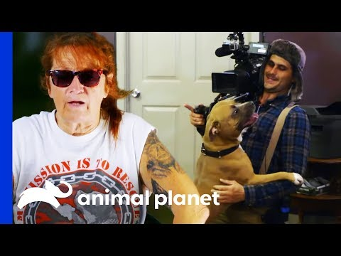 Behind The Scenes Of Villalobos Dog Rescues With Tia Torres   Pit Bulls & Parolees