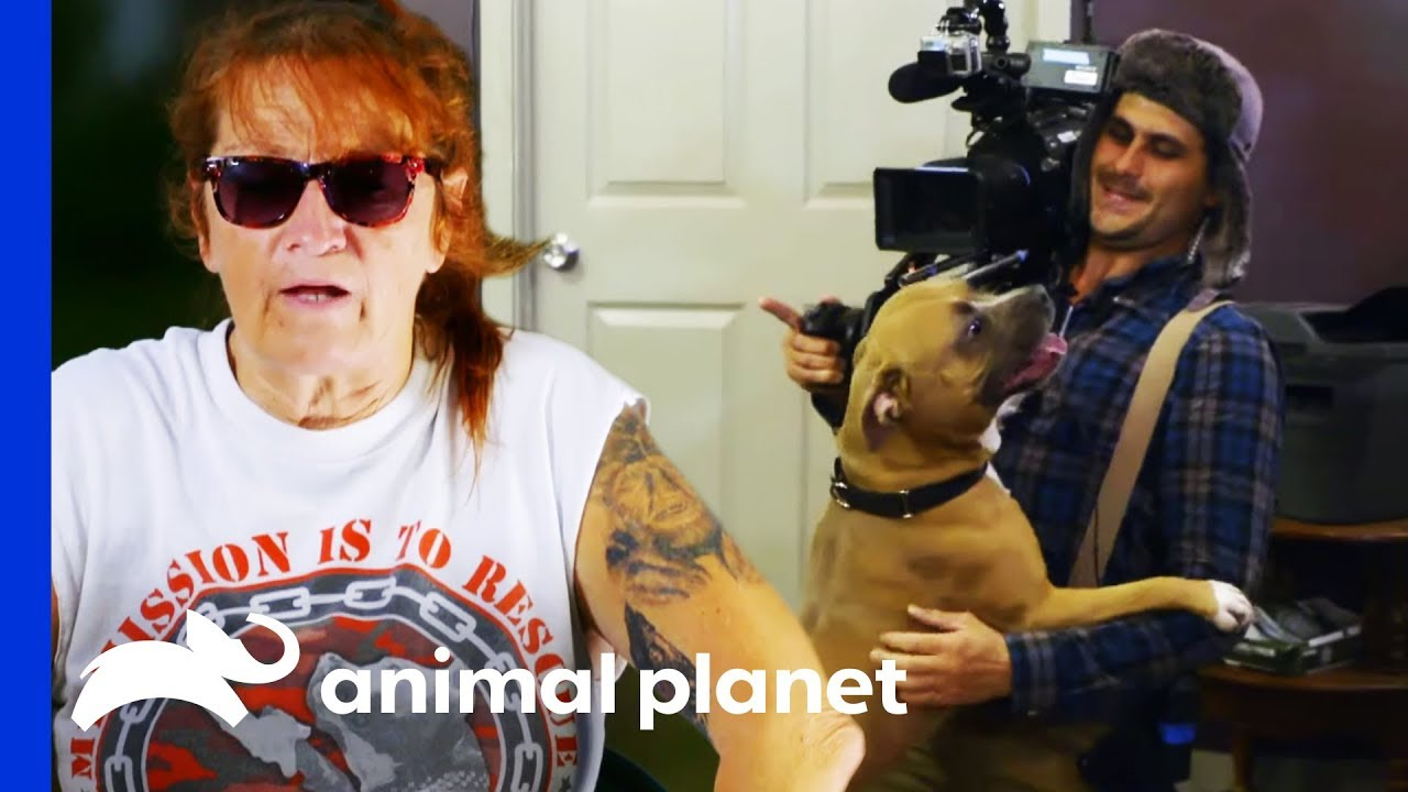 Behind The Scenes Of Villalobos Dog Rescues With Tia Torres Pit Bulls Parolees Youtube