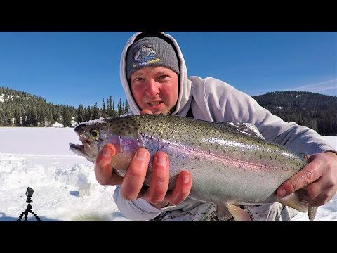Ice Fishing Rainbow Trout With No Electronics (British Columbia)
