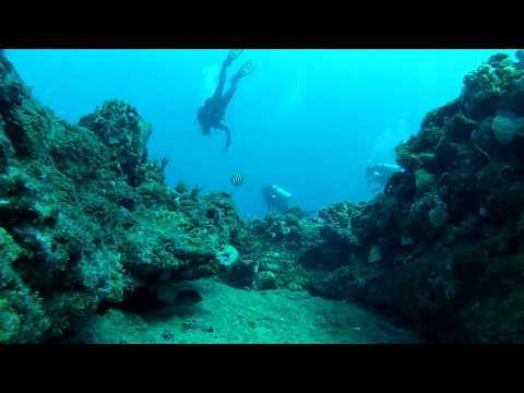 1st Dive of Day off Jupiter, Florida 2-9-13