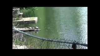 BBB Show-more  wildlife and fishing for the show