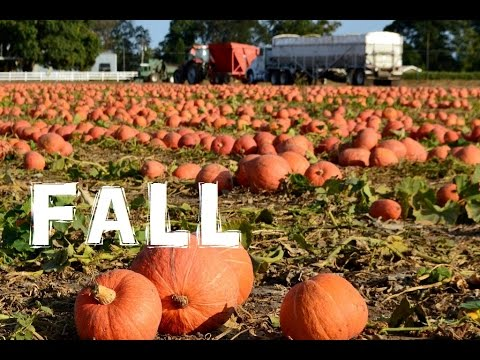 (The Northwest Forager) Ep. 8 Autumn Equinox - FALL