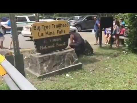 El Yunque  | Ileanin Vlogs |VLOG 24