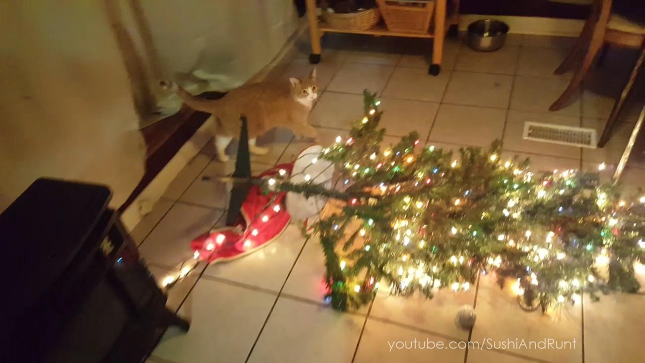 Cat Knocks Over Christmas Tree, Mail Time And Much More