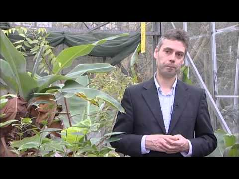 Research Showcase - The effect of crops on climate change - University of Reading