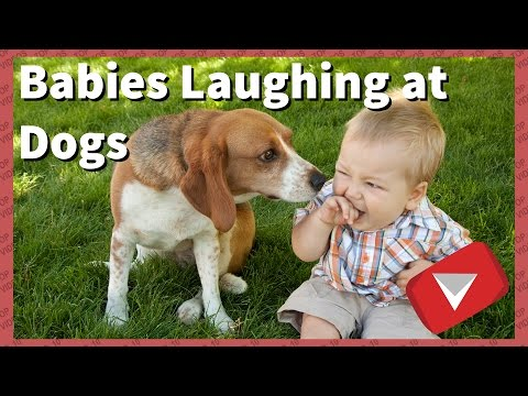 Funny Babies Laughing At Dogs Compilation [2017] (TOP 10 VIDEOS)