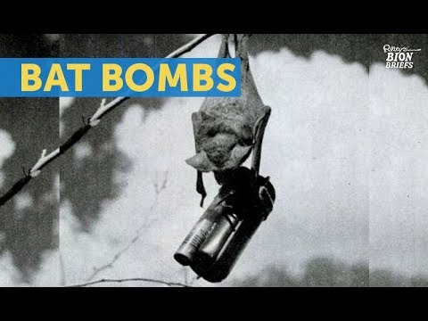 Bat Bombs Were In Competition With the Atom Bomb
