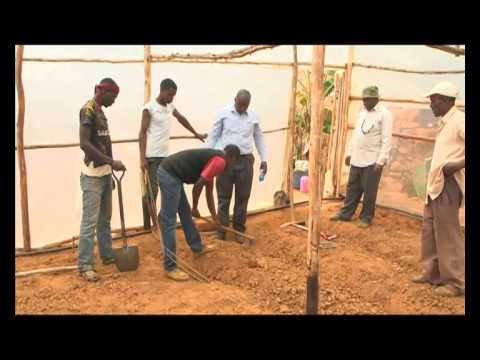 Shamba Shape Up Sn 05 - Ep 05 Planting Tomatoes, Keeping Sheep & Cows (English)