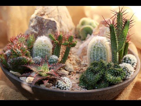 Make a Mini High Desert Succulent Garden