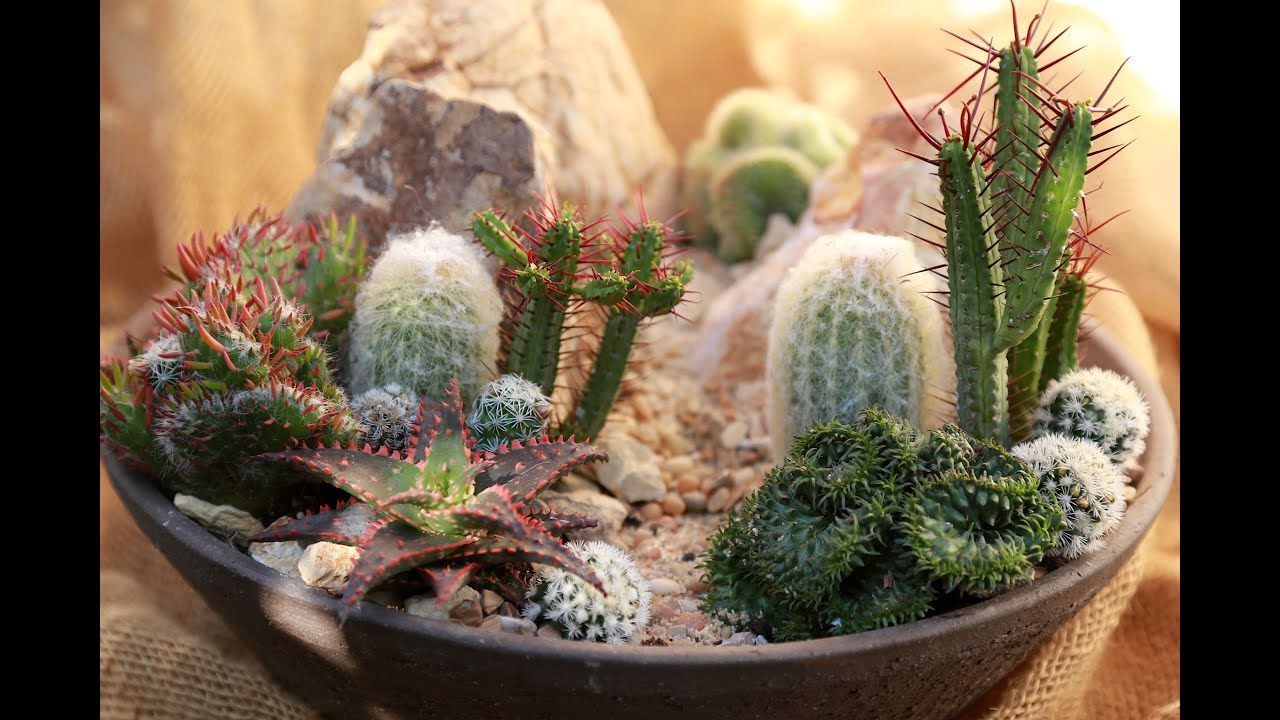 How To Make A Mini High Desert Cactus Garden Youtube