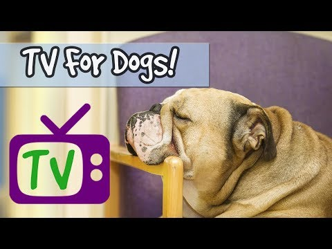 TV for Dogs, Nature Footage for Dogs, Relaxing Music for Dogs! Help Stressed Dogs and Puppies Sleep!